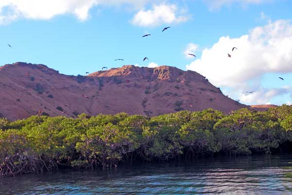 komodo-flores-kalong-island