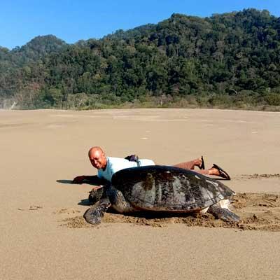 indonesie-tortue-sukamade