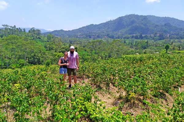 visite-plantation-piment-sidemen