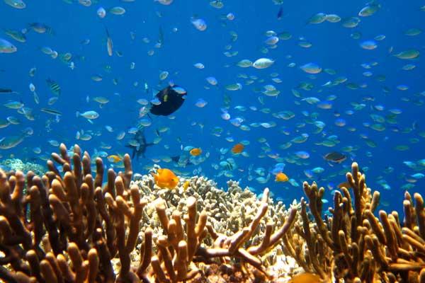 snorkelling-menjangan-island