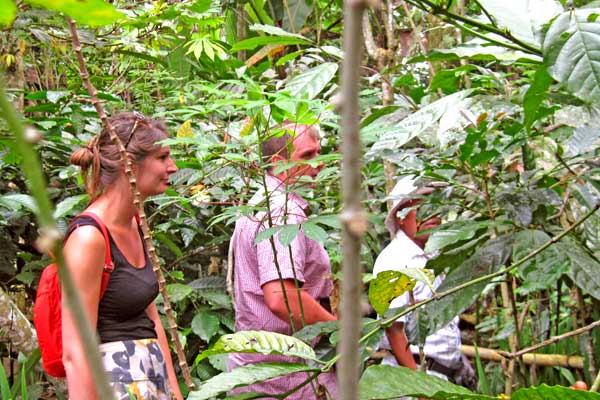 plantation-cafe-caco
